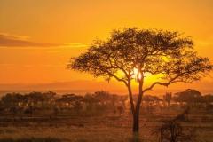 botswana_sunset_tommurphy